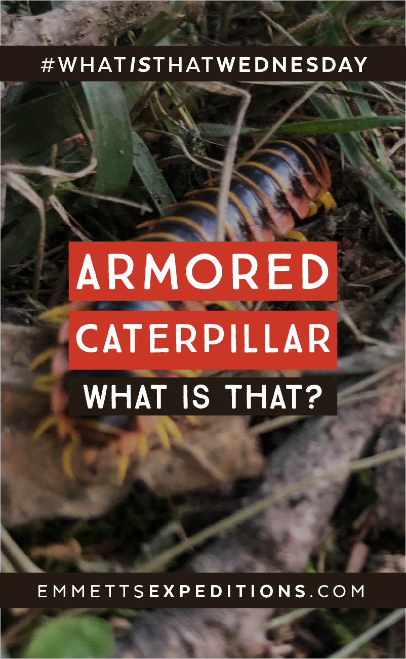 Pin Armored Caterpillar What is That?